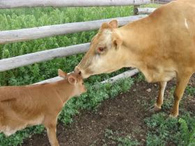 Feeling Good Friday: The Benefits of Raw Milk