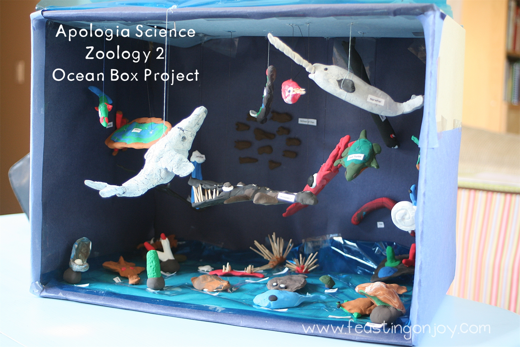 Apologia Science~ Zoology 2 Ocean Box Project