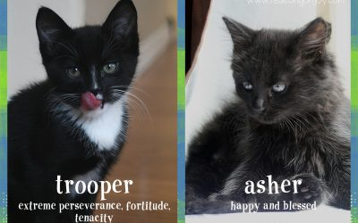 New Additions to Our Family – Pet Therapy!