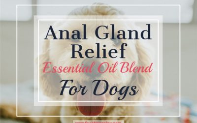 Anal Gland Relief Essential Oil Blend for Dogs