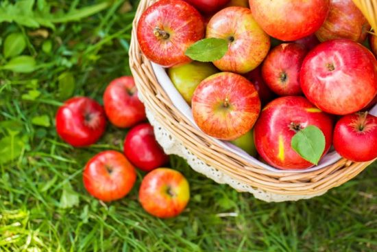 basket-of-apples-in-grass